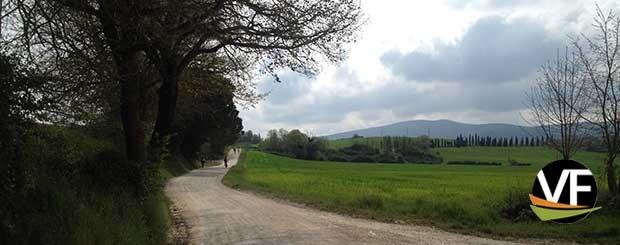 lucca - Siena sulla Francigena
